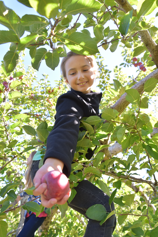 EL_Apple_Picking_2016_014.jpg