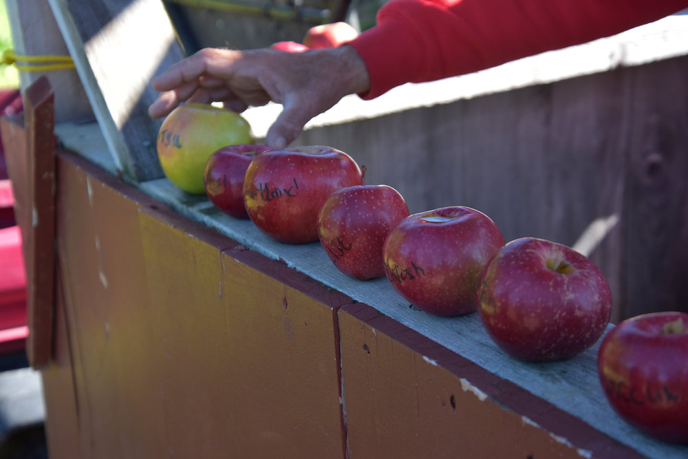 EL_Apple_Picking_2016_033.jpg
