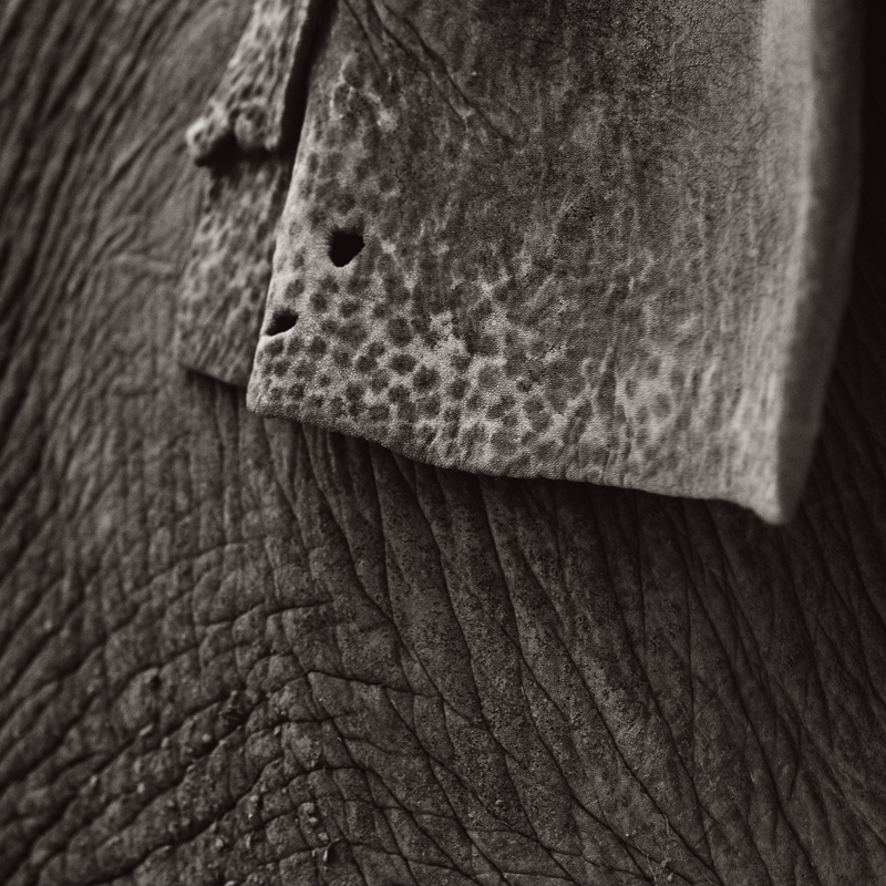 Hope Elephants #2