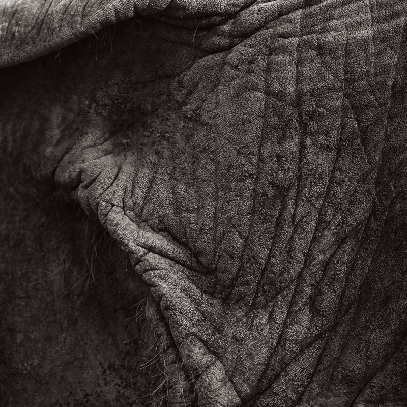 Hope Elephants #3