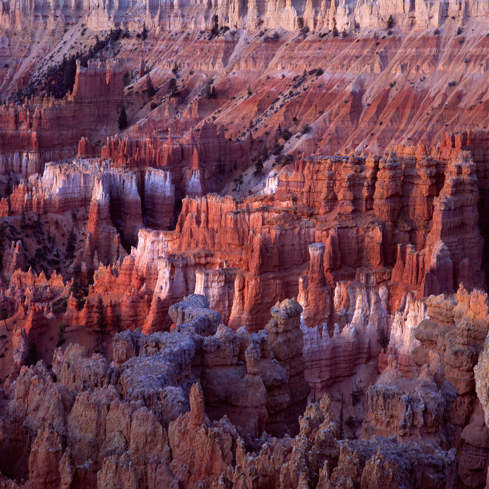 Hoodoos_at_Dawn_Utah_Nickelson.jpg