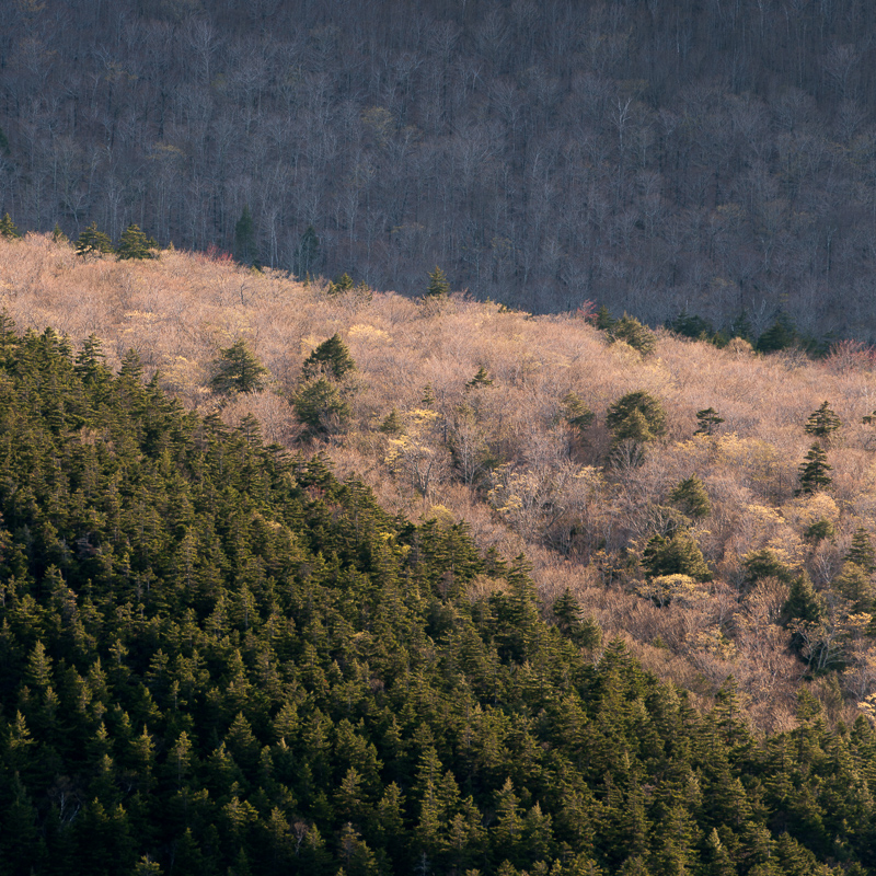 Cadillac-Trees-Acadia-Jim-Nickelson.jpg