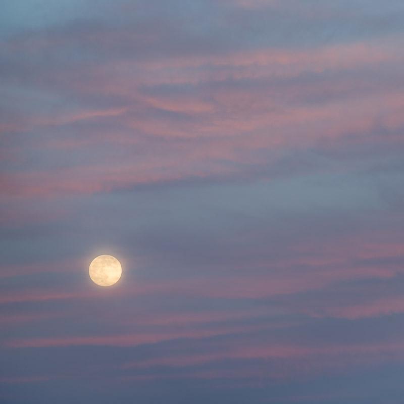 Summer Moon V
