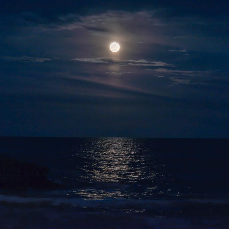 Trapper Moon III