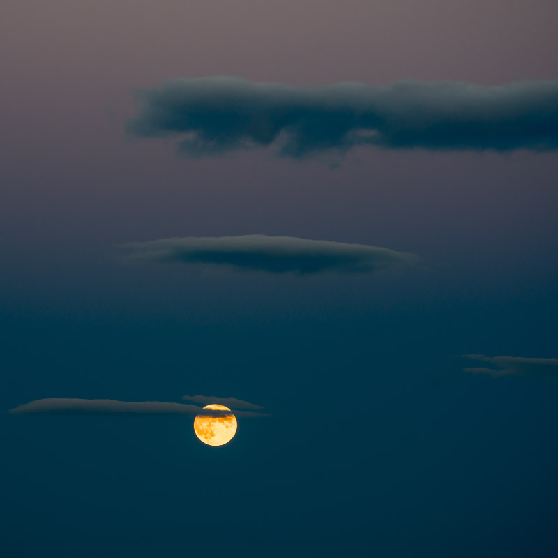 Wine Moon I