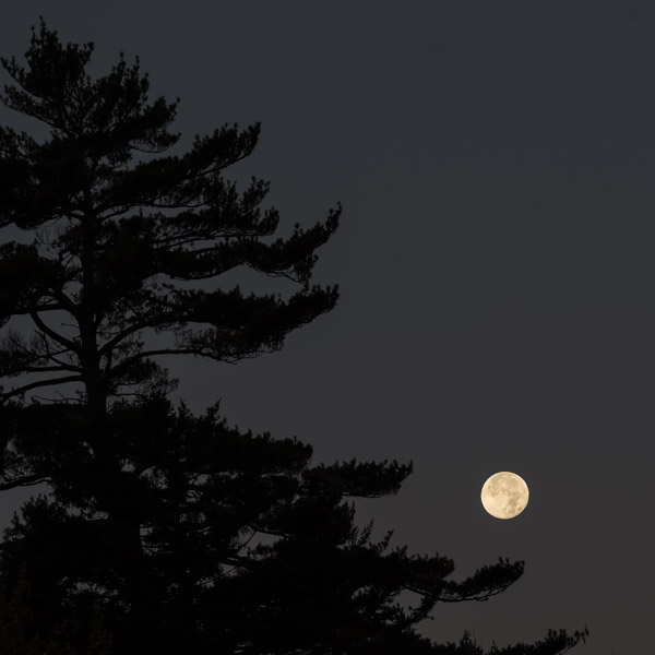 """Kindly Moon II"", Copyright Jim Nickelson. All Rights Reserved."