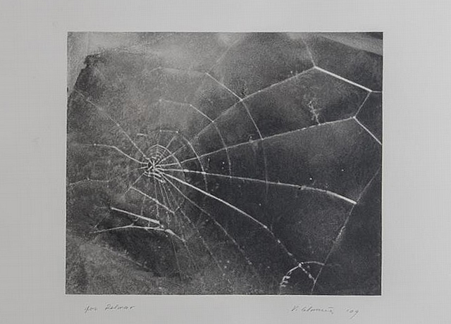 """ Spiderweb, for Lincoln Center/List Art Program ,"" by Vija Celmins, 2009, screenprint on black wove paper,  Stair Galleries  (December 2014)"
