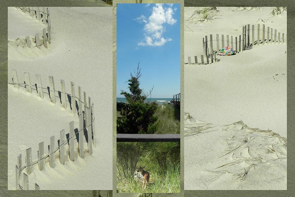 grove 1 copy.jpg