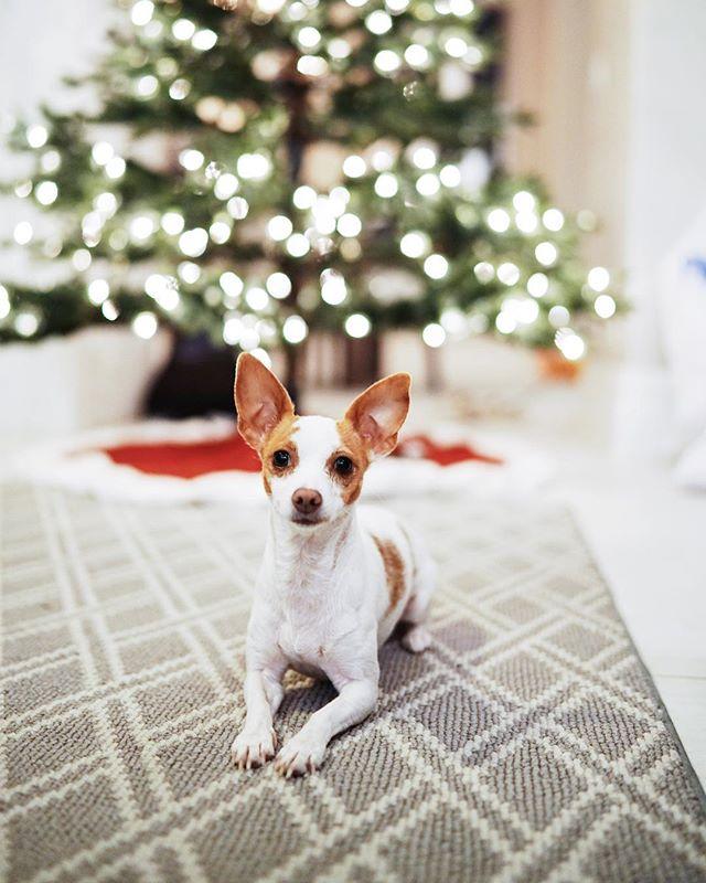 dear santa, besides a few prank calls i was a pretty good girl this year xoxo P