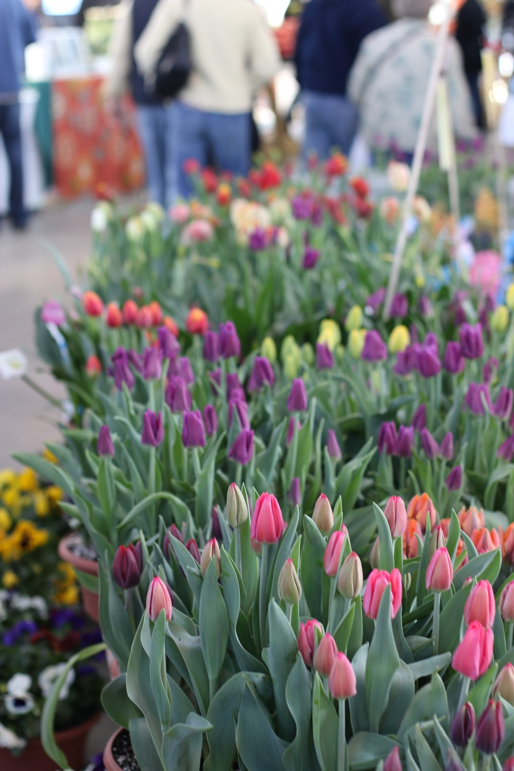 Tulips - Eastern Market, Detroit, MI - April 2014