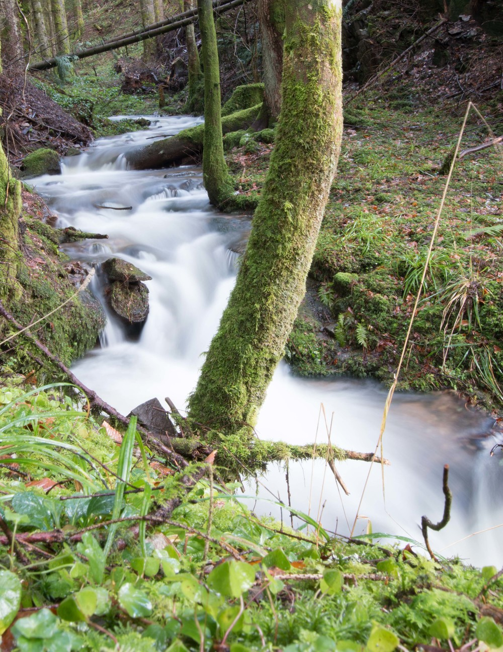 One of the thousands of streams that run through the trees and hills of the Black Forest