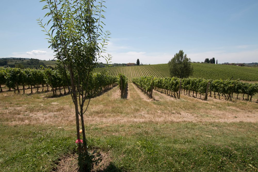Ruffinio vineyards - where the grapes are grown!