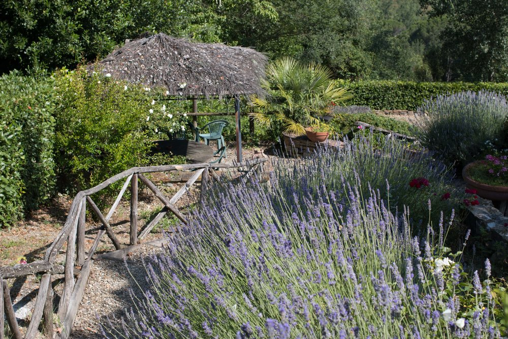 Path down to the pool lined with lavender and overlook vineyards
