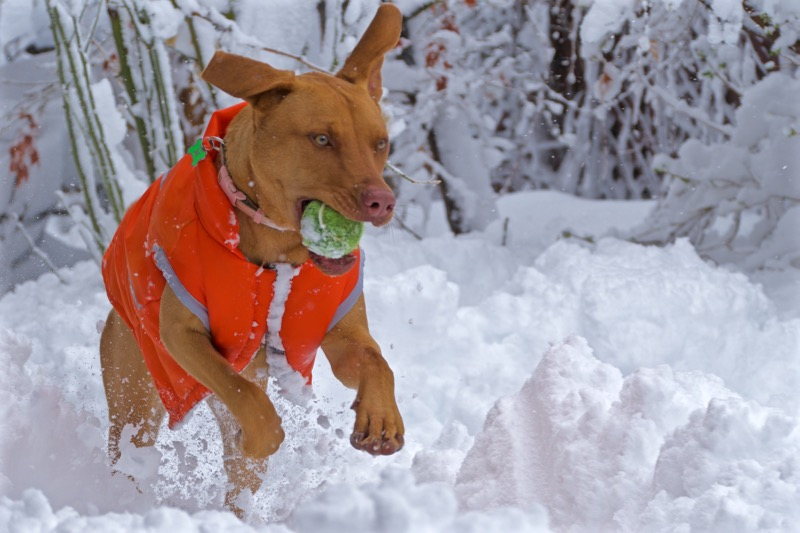 Syd_snow.jpg