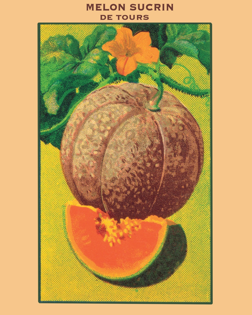 Melon Seed Packet Print