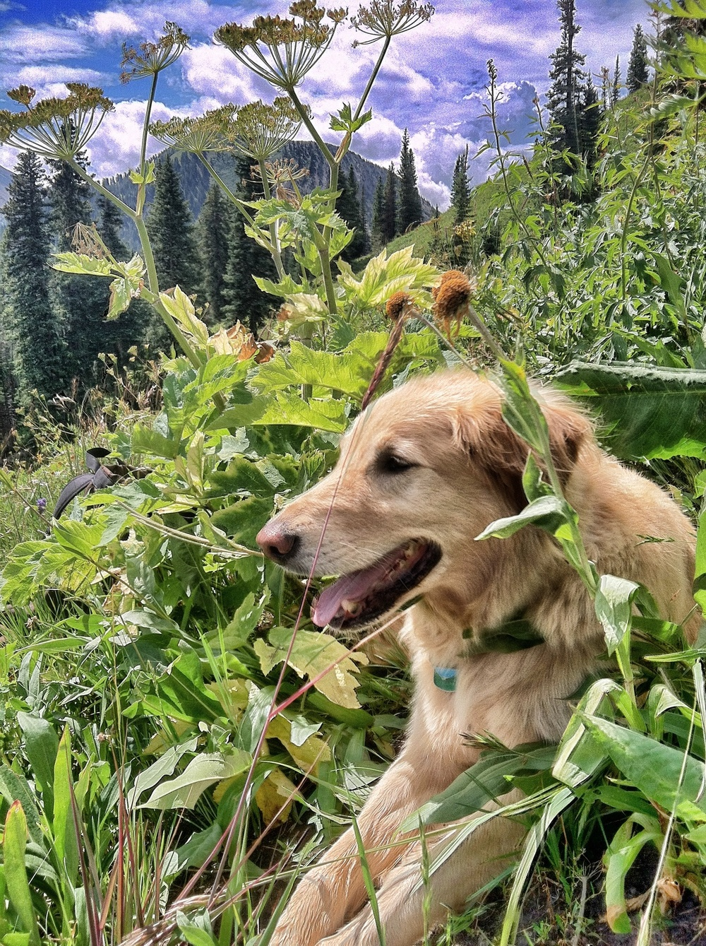 Sunday morning hike in Marble bowl. Ragged Mountains, CO.   Rilkey's such a poser-dog.