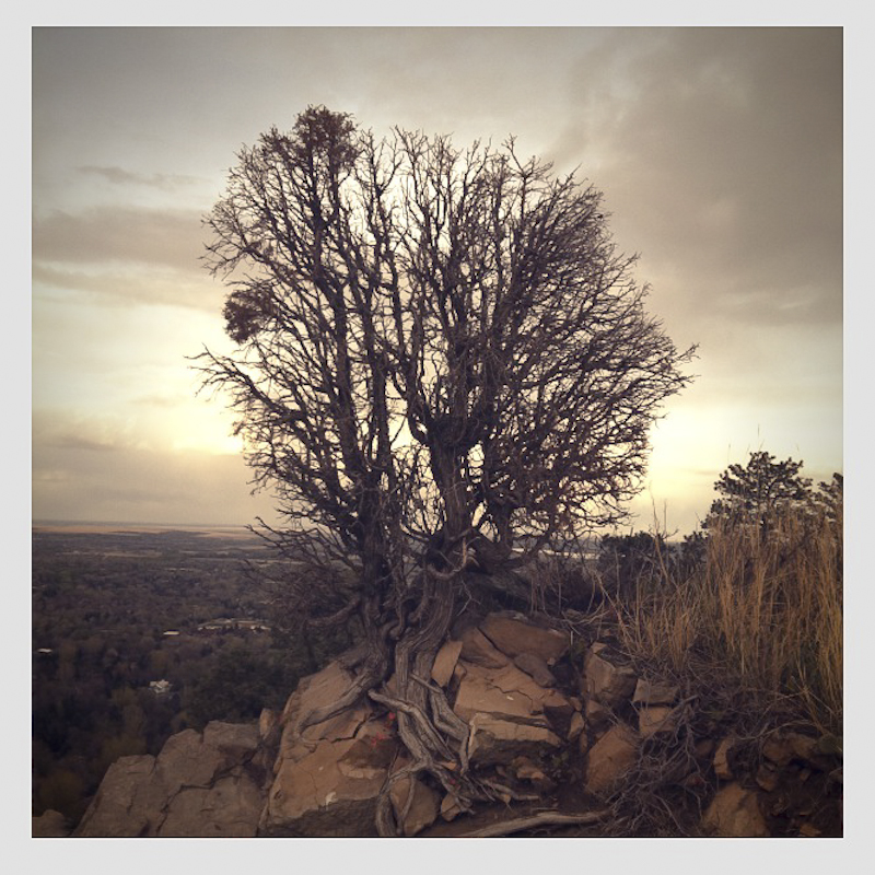 Love this tree…I walk past it with rilkey almost everyday.