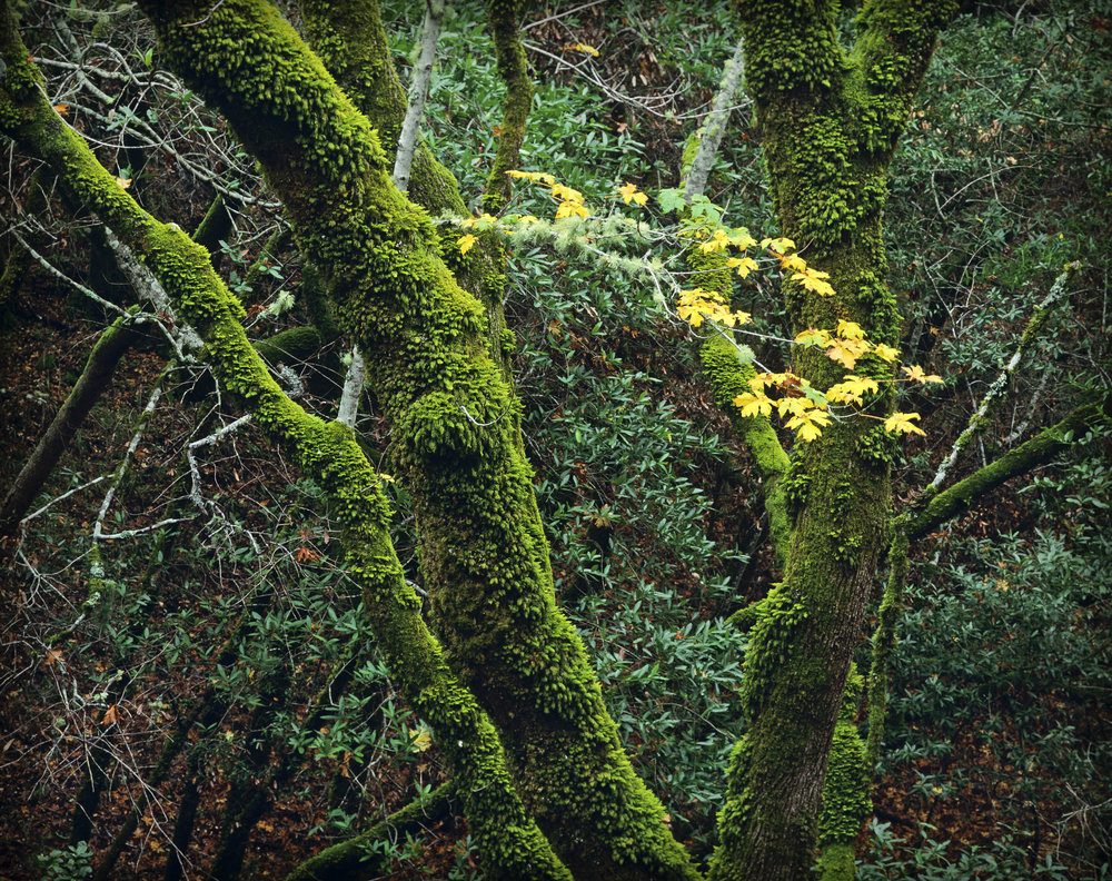 trees-15.jpg