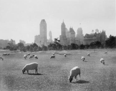 Sheep_Meadow_Central_Park.jpg