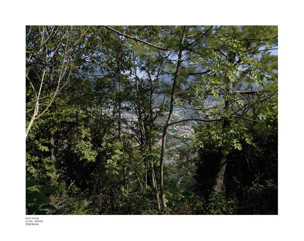 Aerial trees txt_1.jpg