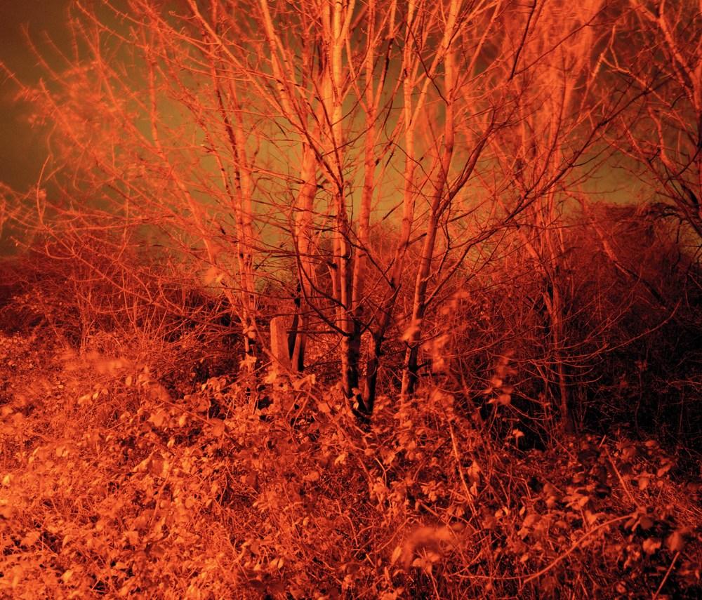 Forest (fire).jpg