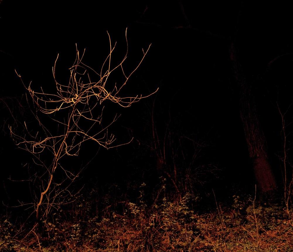 single tree.jpg