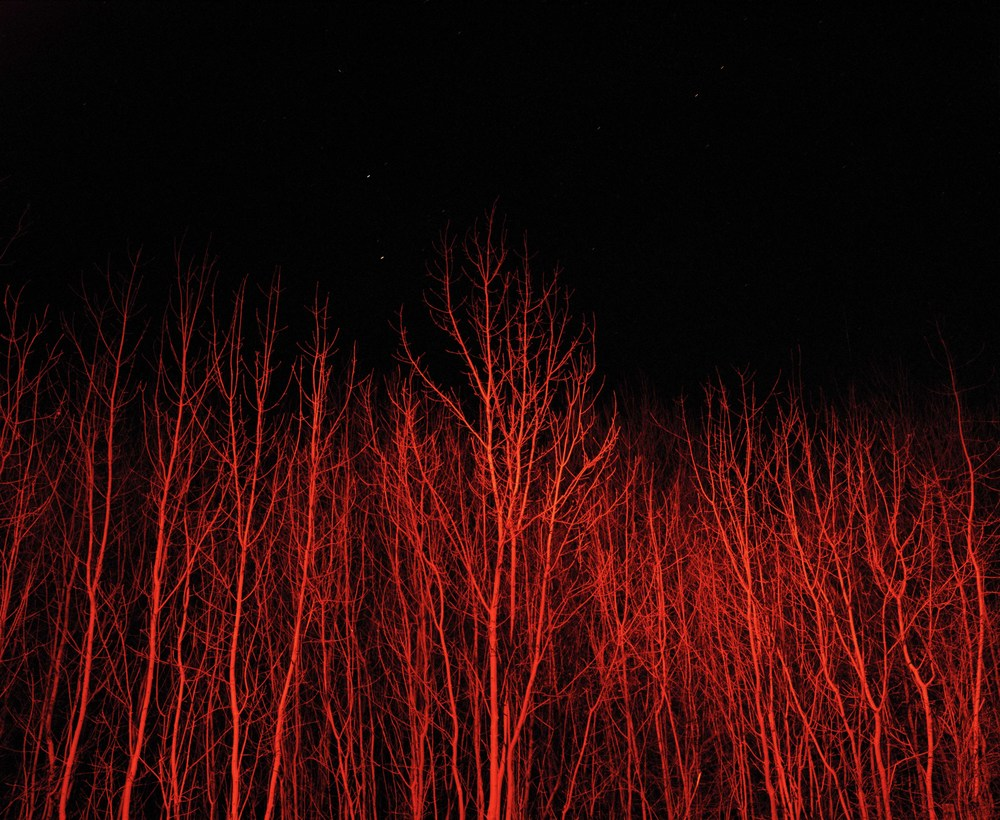 Red branches.jpg