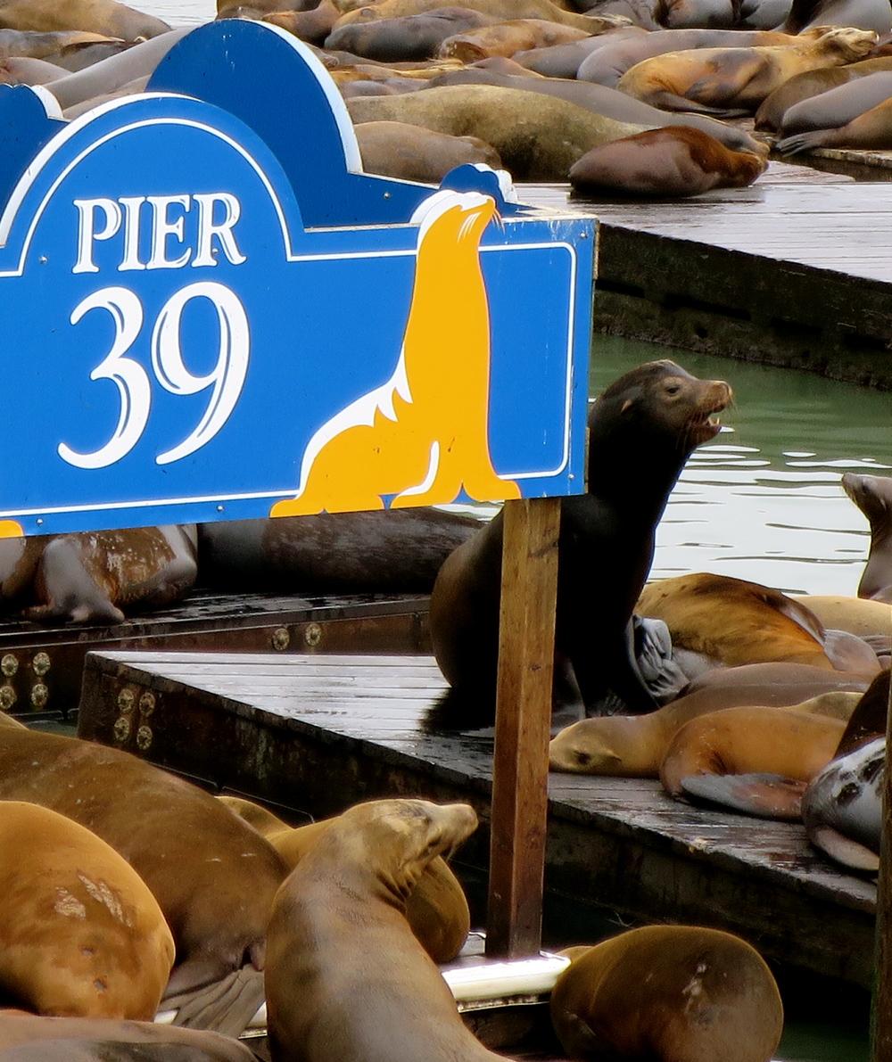 Pier 39.