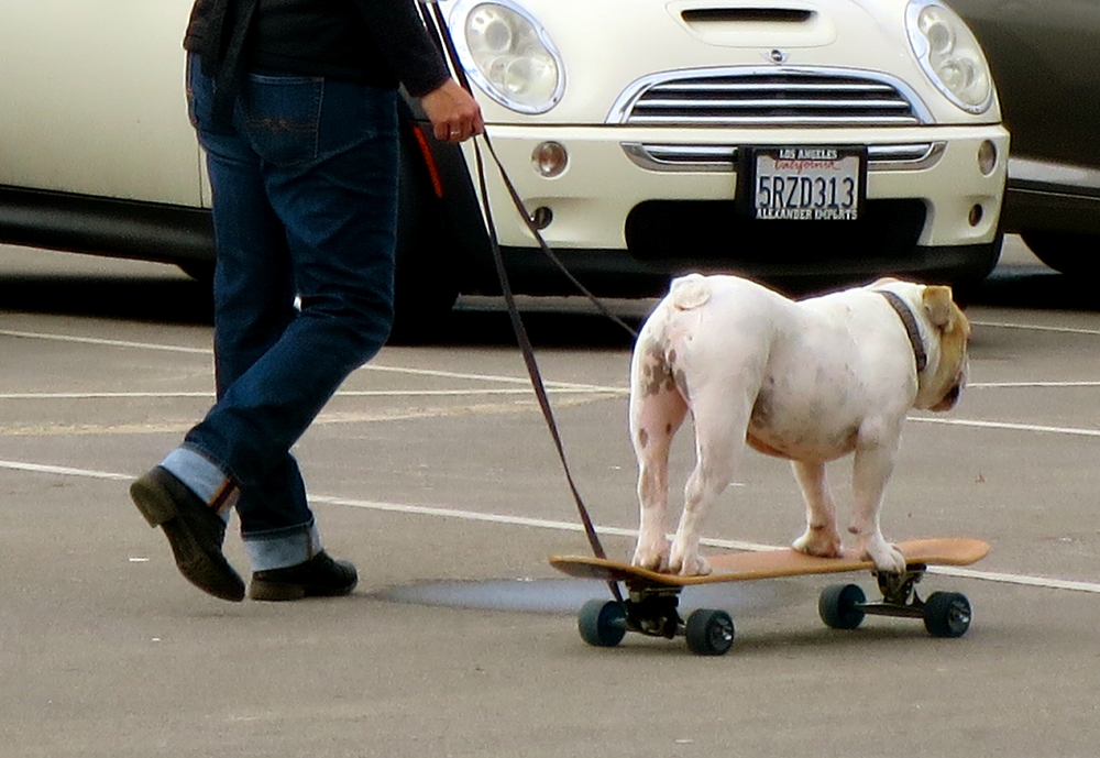 Dog on a skateboard! Obviously!