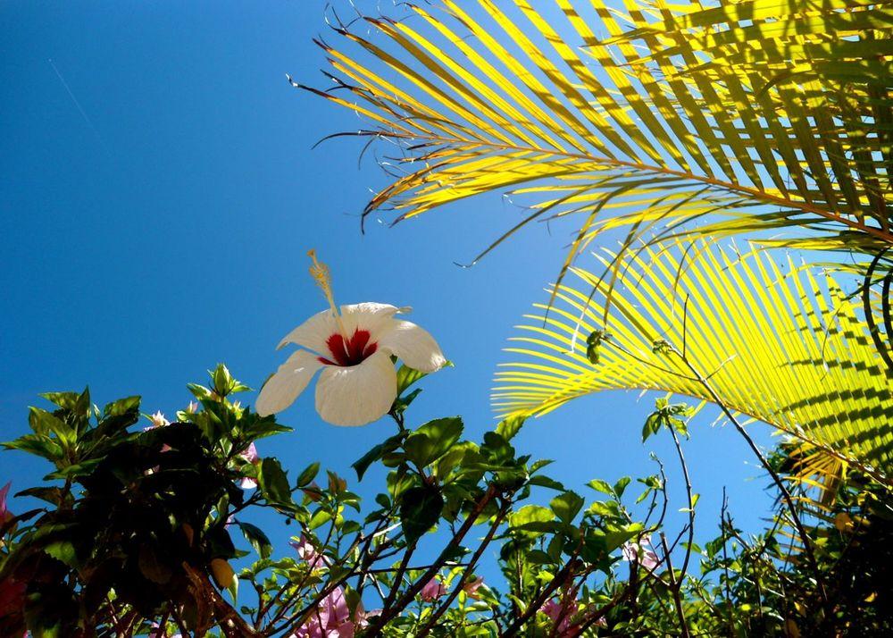 Sky_Flower.jpg