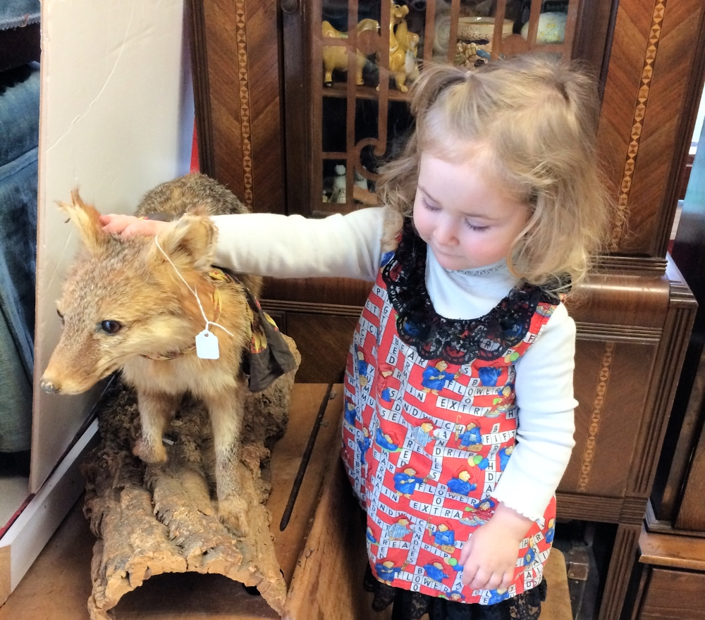 We believe that being a collector and curator of the fascinating part of natural history requires being a teacher and we like to share our knowledge.