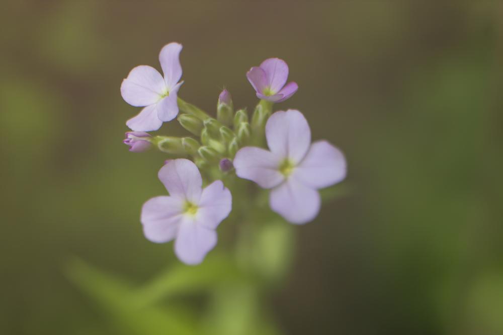 Flower 50mm.jpg