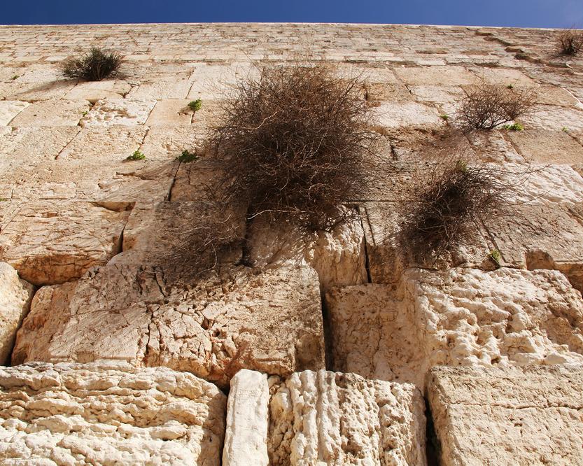 Western_Wall__Israel.jpg