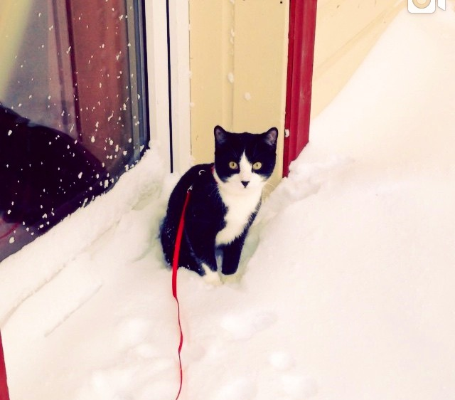 We were tweeted this picture of a male cat from Russia we don't know his name   We hope you enjoyed if you have any pictures you would like to email us, please do.  selbyeveryday@outlook.com