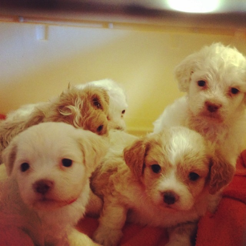 Clyne (front right) and his siblings in the photo that we fell in love with