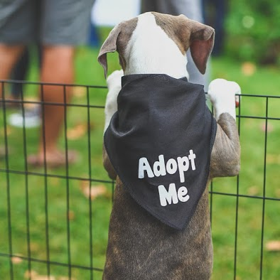 We hope that you will adopt responsibly and follow these helpful tips should you choose to adopt littermates! Please follow us on Instagram, Facebook, Twitter and Snapchat (username: wagsandwalks). Also, don't forget to sign up for our e-mail newsletter, and check our website for available dogs. Who doesn't love cute animal updates?   XO, Ashley Team Wags