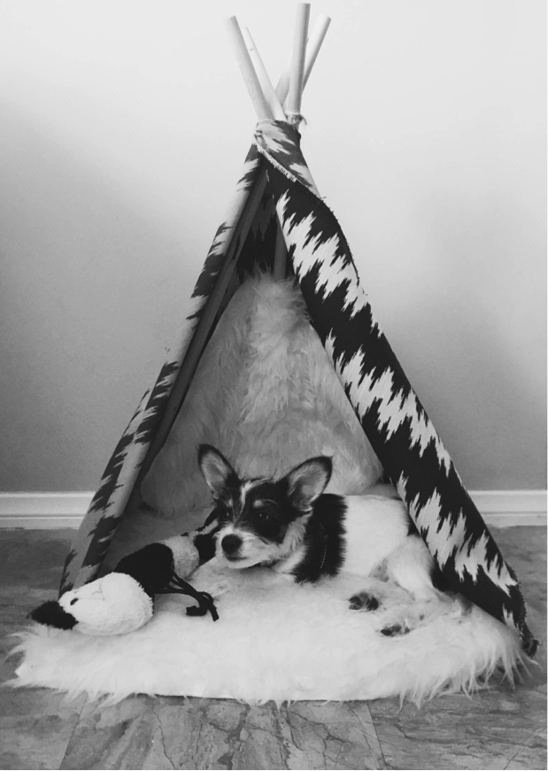 Peter (now Gunner) hanging out in his teepee at his forever home!