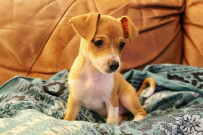 This is Eleanor, she and her siblings are looking for their forever homes. She is an extremely playful and happy little pup who is spayed, microchipped and completely up-to-date on vaccines! See Eleanor.