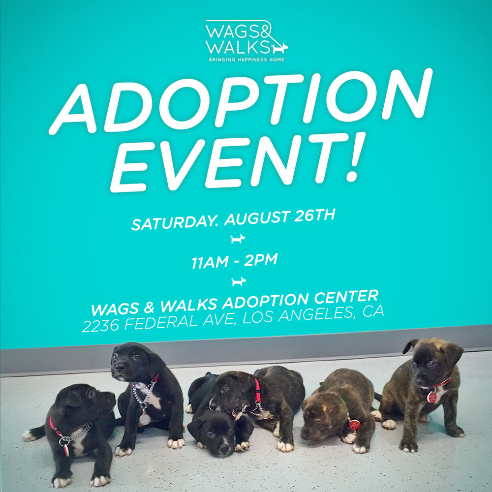 adoptionevent.jpg