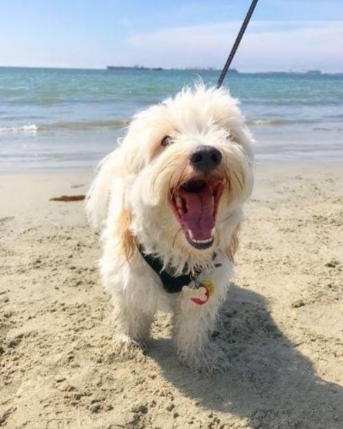LA_dog_friendly_beaches_wagsandwalks