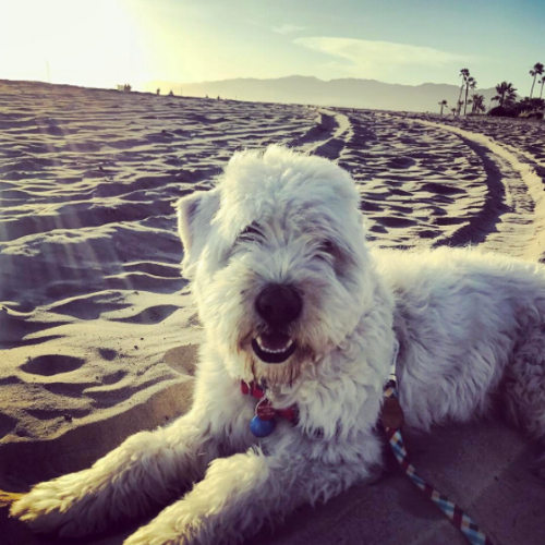 wagsandwalks_LA_dog_beaches