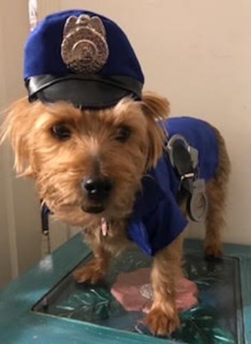 Wags and Walks_Halloween_Police Officer