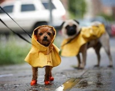 af8718094673cbf77285f7bfd5e9a8db--yellow-raincoat-rain-coats.jpg