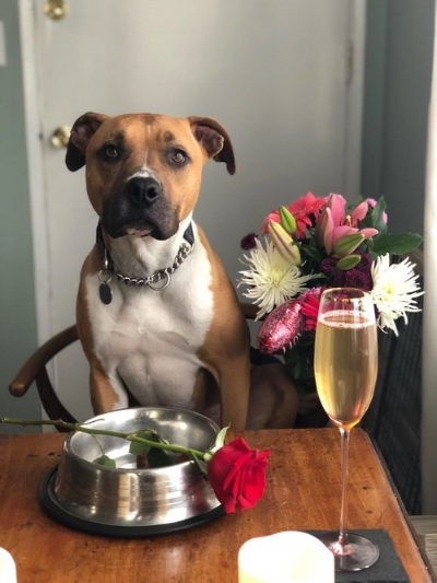 Our (available for adoption) pup,  Gingee , is feeling the Valentine's Day spirit