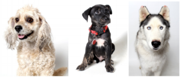 A few of our adoptable pups (L-R): Beyonce, Riesling, Barton