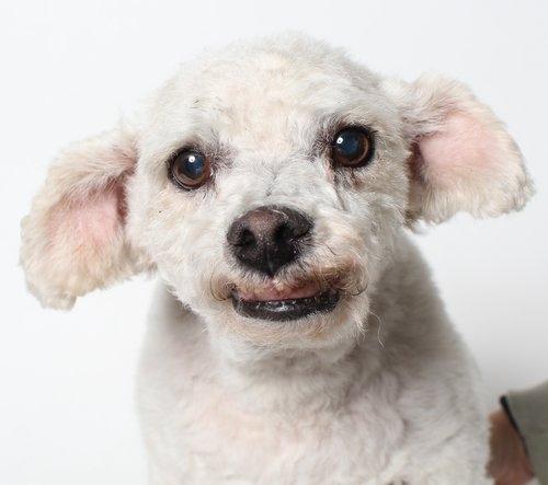 Wags and Walks_Senior Dog_Simon