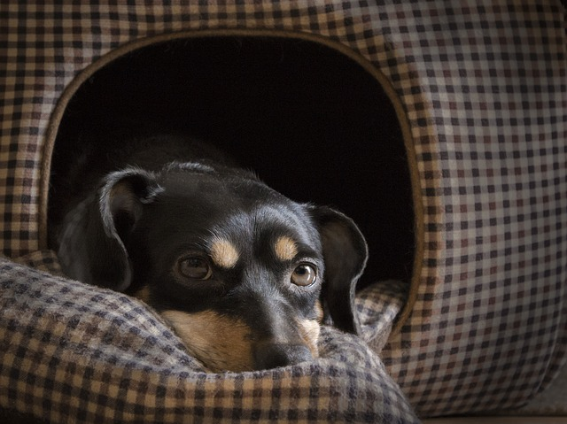 dog-1950413_640.jpg