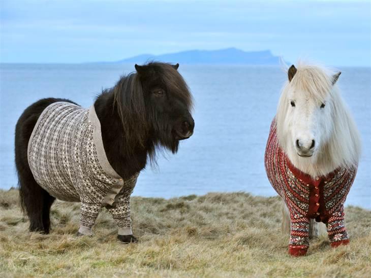 Mini ponies ahhhhhhh!!!!!!