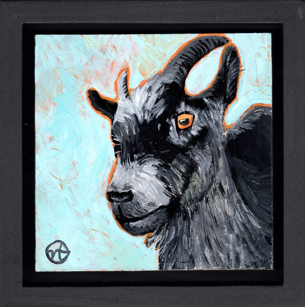 Untitled Goat