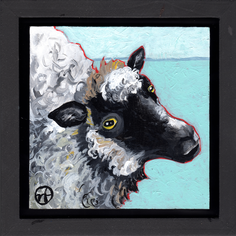 Untitled Sheep